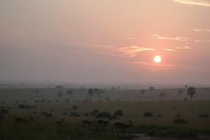 Soloppgang på savannen